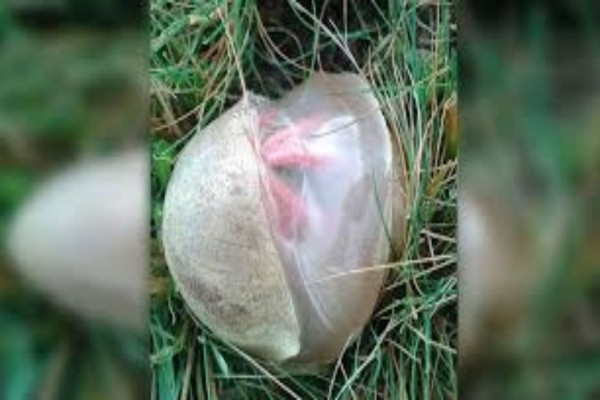 Γυναίκα βγήκε στην αυλή της και βρήκε αυτό το αυγό! Έπαθε σοκ μόλις έμαθε τι είναι! (Video)