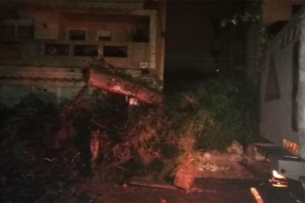 Συναγερμός στην Κρήτη: Δέντρο έπεσε πάνω σε αυτοκίνητο!