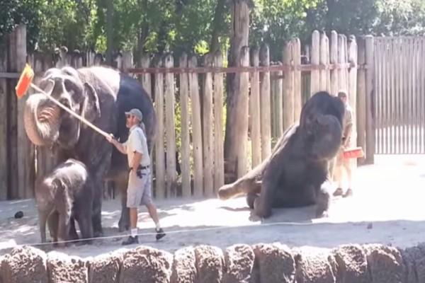 Μπήκαν στον ζωολογικό κήπο να καθαρίσουν όταν ο ελέφαντας άρπαξε την σκούπα και... Θα πάθετε πλάκα!