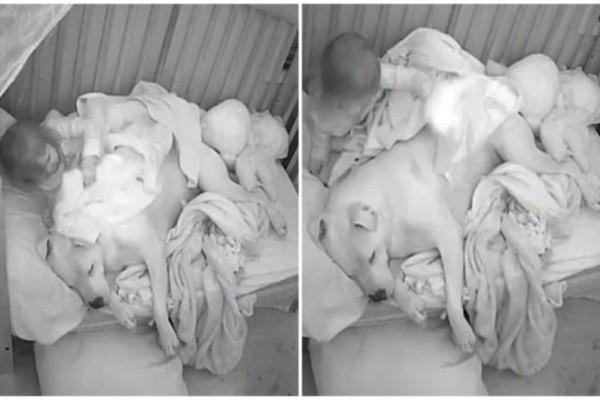 Σκύλος ξαπλώνει δίπλα στο μωρό και... Πάθαμε πλάκα όταν μάθαμε τον λόγο!