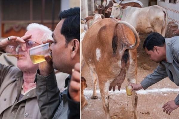 Άντρες πίνουν ούρα αγελάδας και υποστηρίζουν ότι μπορούν να γιατρευτούν από...Δεν θα πιστεύετε στα μάτια σας!