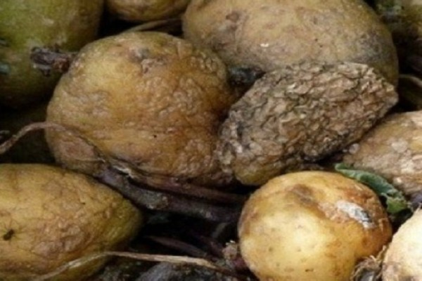 Ανείπωτη φρίκη: Ολόκληρη οικογένεια βρήκε τραγικό θάνατο εξαιτίας αυτού του λαχανικού που υπάρχει σε κάθε σπίτι.