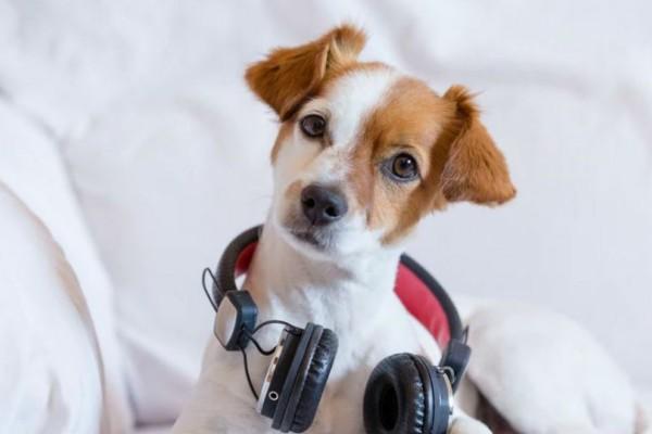 Η Spotify δημιουργεί playlists για... σκύλους!