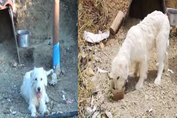 Αυτό το σκυλάκι κάθεται για 2 χρόνια στην ίδια θέση! Μόλις δείτε ολόκληρη την φωτογραφία θα παγώσετε!