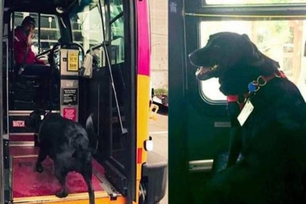 Σκυλίτσα παίρνει μόνη της το λεωφορείο πάει σε πάρκο να παίξει και επιστρέφει στο σπίτι της!