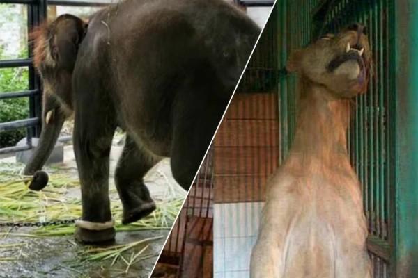 Ο ζωολογικός κήπος του θανάτου: Η εικόνα με το λιοντάρι και τον ελέφαντα σοκάρει!