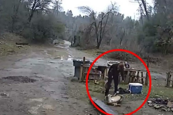 Γυναίκα τέρας κακοποίησε και δάγκωσε τον σκύλο της. Η συνέχεια θα σας εξοργίσει!