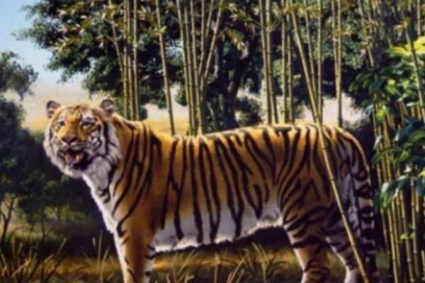 Μόνο το 5% των ανθρώπων μπορεί να δει την δεύτερη τίγρη! Εσείς; (photos)
