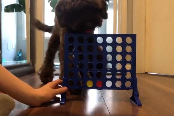 Τύπος αποφασίζει να παίξει με το σκύλο του Σκορ 4... Το αποτέλεσμα θα σας αφήσει με το στόμα ανοιχτό!