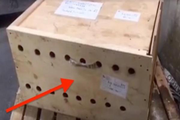 Βρήκαν στο αεροδρόμιο αυτό το δέμα και νόμιζαν ότι περιέχει βόμβα...Όταν είδαν το περιεχόμενο του όμως πάγωσαν!