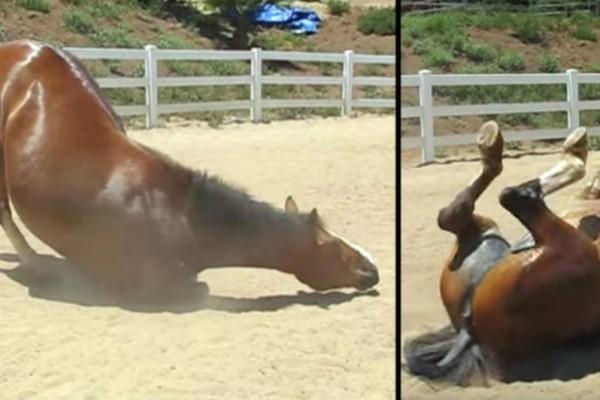 Γυναίκα είδε το άλογό της να συμπεριφέρεται περίεργα. Άνοιξε την κάμερα και...