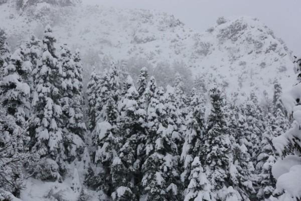 Χιόνια ακόμη και στα πιο χαμηλά σημεία της Εύβοιας!