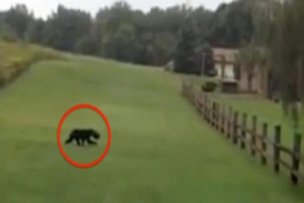 Είδαν ένα άγριο ζώο να τους πλησιάζει απειλητικά - Όταν πρόσεξαν λίγο καλύτερα το κεφάλι του, πάγωσαν!