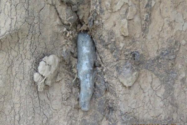 Ένας ελέφαντας έβαλε το κεφάλι του σε έναν κορμό δέντρου... Ο λόγος που το έκανε ραγίζει καρδιές!