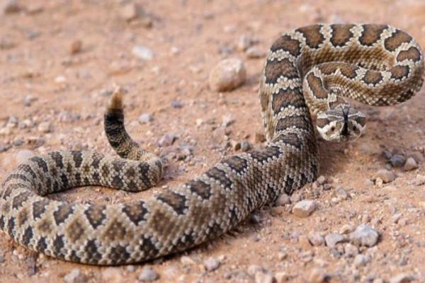 Αυτός ο άντρας σκότωσε ένα φίδι - Αυτό που έγινε λίγα δευτερόλεπτα μετά θα σας κόψει την ανάσα!