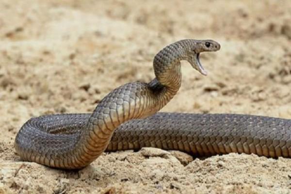 Αδιανόητο: Τον δάγκωσε ένα φίδι κι αμέσως μετά αυτός δάγκωσε τη γυναίκα του! Μόλις μάθετε το λόγο θα παγώσετε!