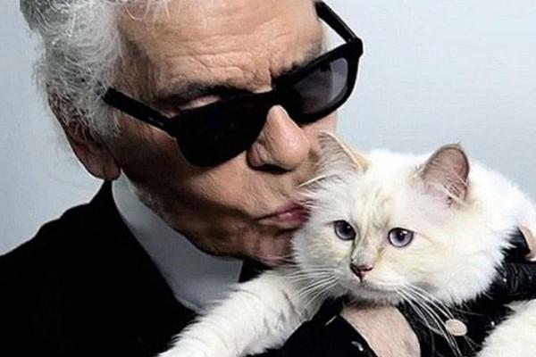 Η χλιδάτη ζωή της γάτας του Καρλ Λάγκερφελντ έναν χρόνο μετά το θάνατό του! (photos)