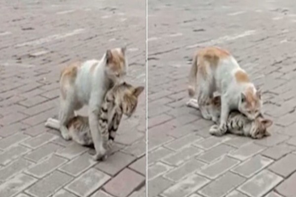 Αυτή η γάτα αρνείται να αφήσει τον νεκρό της φίλο...Τότε έκανε κάτι που ραγίζει καρδιές