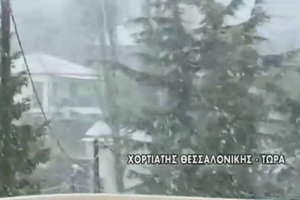 Μαγικές εικόνες: «Άσπρη» μέρα στον Χορτιάτη Θεσσαλονίκης! (video)