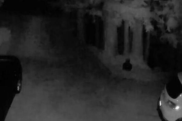 Οικογένεια όταν είδε τι είχε καταγράψει η κάμερα ασφαλείας στην αυλή τους σοκαρίστηκαν! (Video)