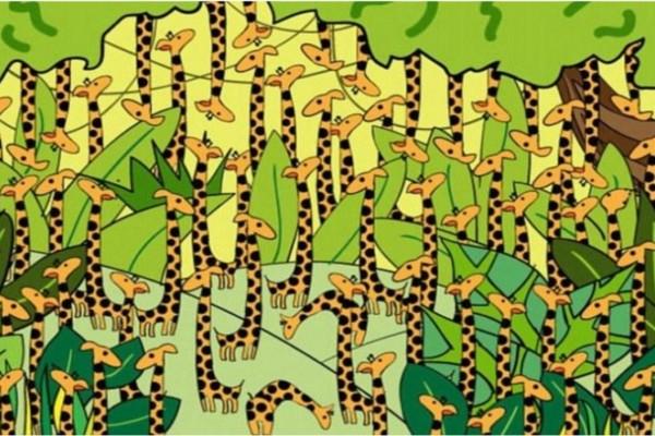 Αν βρείτε το φίδι στην φωτογραφία μέσα σε 5 δευτερόλεπτα τότε έχετε τρομερή αντίληψη! Όλοι απέτυχαν!