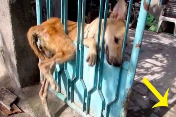 Μια αδέσποτη σκυλίτσα είχε κολλήσει στην πόρτα και κανείς δεν θέλει να την βοηθήσει – Προσέξτε όμως ποιος έρχεται από τα δεξιά της!