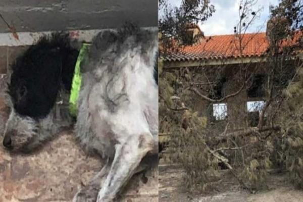 Ραγίζει καρδιές: Αυτός ο καημένος σκύλος δεν εγκατέλειψε τον νεκρό ιδιοκτήτη του μετά την πυρκαγιά!
