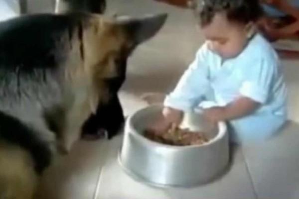 Κλάμα: Αυτός ο σκύλος έκλεψε το φαγητό του μωρού. Αυτό που έγινε μετά θα σας αφήσει άφωνους!
