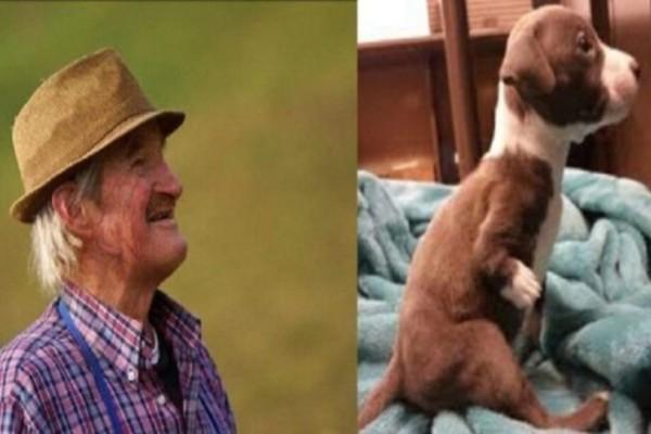 Θα δακρύσετε: 7χρονο αγόρι ζήτησε από τον παππού να του δώσει ένα σκυλάκι - Όταν δείτε ποιο διάλεξε μέσα σε πολλά κουτάβια θα πάρετε ένα γερό μάθημα