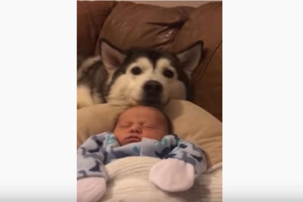 Αυτός ο σκύλος κοιμάται πάντα δίπλα στο μωρό - Η συνέχεια θα σας κάνει να δακρύσετε!