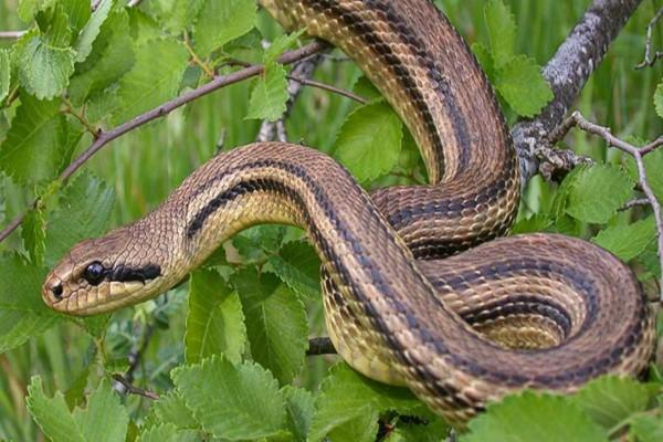 Αυτό το φίδι το αγαπούν όλα τα παιδιά - Μόλις δείτε το λόγο θα μείνετε άφωνοι!