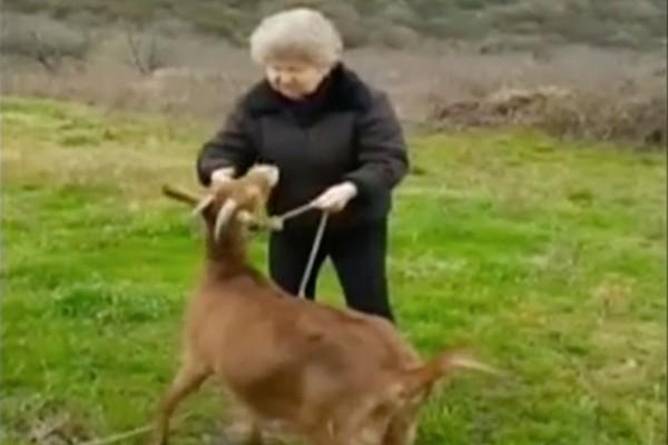 Έπος: Γιαγιά βγάζει την κατσίκα της βόλτα και… τα χώνει στην Κυβέρνηση! (video)