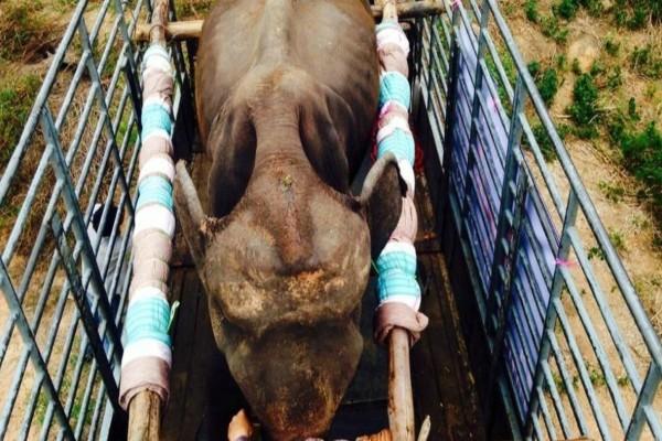Είχαν δεμένο αυτόν τον ελέφαντα και τον κακοποιούσαν για όλη του την ζωή - Μια μέρα όμως...