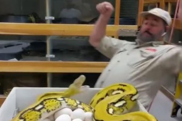 Αυτός ο άνδρας πήγε να αρπάξει τα αυγά ενός φιδιού αλλά...Αυτό που ακολούθησε είναι τρομακτικό