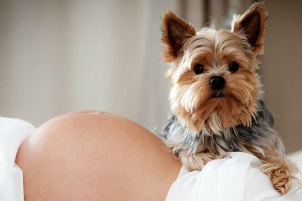 4+1 κατοικίδια που μπορεί να φανούν επικίνδυνα στην εγκυμοσύνη!