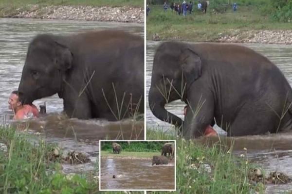 Ελέφαντας βλέπει να πνίγεται ο άντρας που πριν 5 χρόνια του έσωσε τη ζωή - Η αντίδρασή του; Θα σας συγκλονίσει!