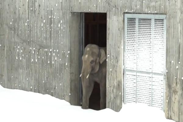 Ο ζωολογικός κήπος είχε γεμίσει χιόνι - Μόλις δείτε τι έκανε ο ελέφαντας θα