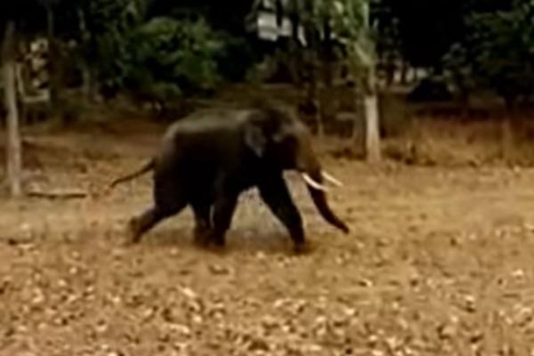 Εξαγριωμένος ελέφαντας σε κατάσταση αμόκ ορμάει σε αγρότη με... τη συνέχεια να σοκάρει - Σκληρές εικόνες (Video)