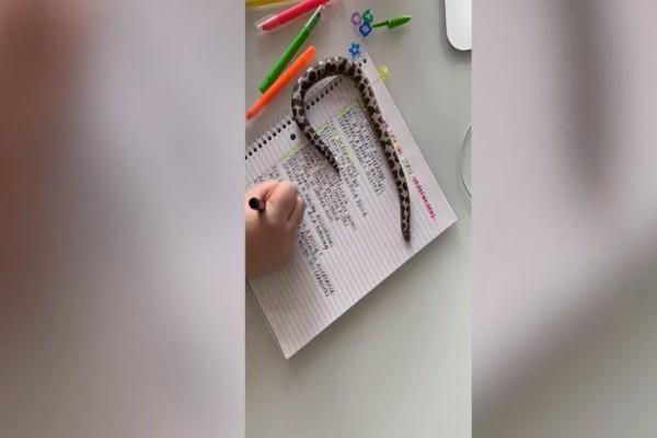 Αδιανόητο: Αυτή η κοπέλα θέλει να διαβάσει και της αποσπά την προσοχή... το φίδι της! (video)