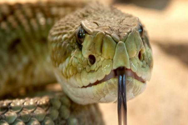 Αδιανόητο: Μετέφερε ένα φίδι με τη μηχανή του - Αυτό που έγινε λίγα δευτερόλεπτα μετά θα σας κάνει να