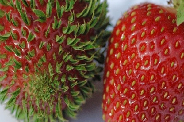 Απίστευτο: Δείτε γιατί τα φρούτα και τα λαχανικά φυτρώνουν πρόωρα - Δώστε βάση!
