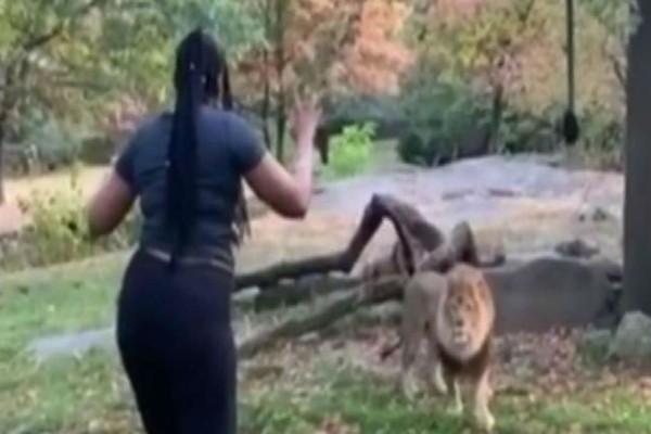 Αυτή η γυναίκα χωρίς να το σκεφτεί ξεκινάει ένα ξέφρενο χορό μπροστά σε ένα λιοντάρι! Όταν δείτε τη συνέχεια θα μείνετε άφωνοι!