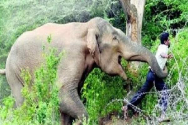 Ήθελε να βγάλει selfie με αυτόν τον ελέφαντα  - Αν ήξερε την τραγική κατάληξή του δεν θα πλησίαζε ποτέ αυτό το ζώο (video)
