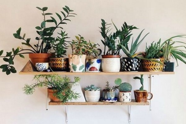 Αυτό το φυτό εσωτερικού χώρου είναι η απόλυτη τάση στη διακόσμηση!