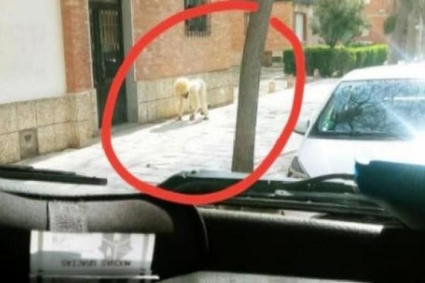 Απίθανο: Άνδρας «έσπασε» την καραντίνα και… ντύθηκε σκύλος για να πάει βόλτα!