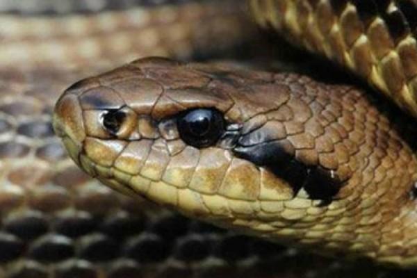 Αδιανόητο: Τη δάγκωσε δηλητηριώδες φίδι πριν 50 χρόνια σήμερα είναι...