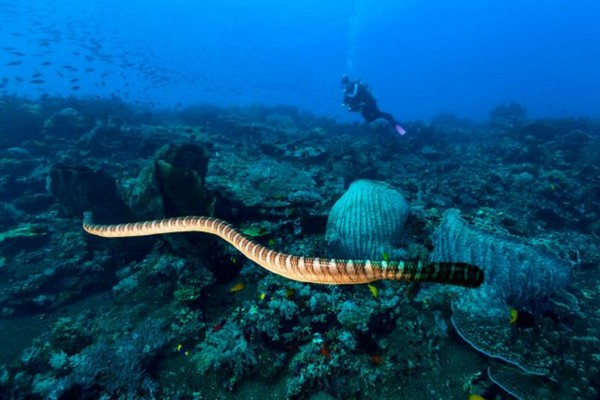 Ένας άντρας ψάρευε αμέριμνος όταν ξαφνικά εμφανίστηκε ένα θαλάσσιο φίδι - Αυτό που έγινε λίγα δευτερόλεπτα μετά θα σας σοκάρει!