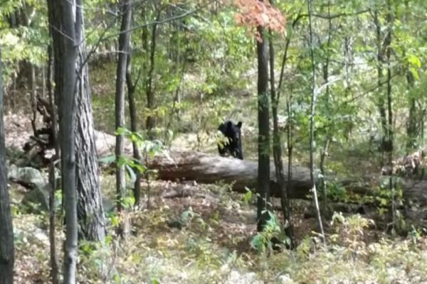 Ένας 22χρονος έβγαζε φωτογραφίες μια αρκούδα που είδε στο δάσος - Αυτό που έγινε λίγα λεπτά μετά θα σας σοκάρει