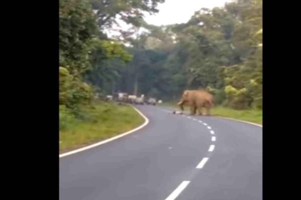 Αυτός ο άντρας επιθυμούσε σαν τρελός να βγάλει selfie με τον επικίνδυνο ελέφαντα - Αυτό που ακολούθησε όμως μετά ήταν εφιάλτης