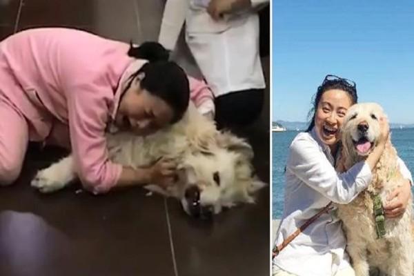 Γυναίκα σπαράζει στο κλάμα πάνω από το σώμα της νεκρής σκυλίτσας της που έφαγε φόλα από τους γείτονές της